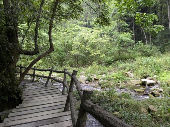 China Wald