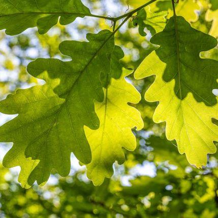 leaves-5151586__480