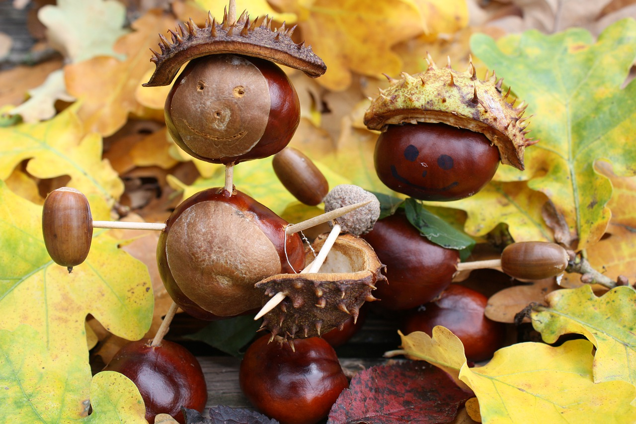 chestnut-5311368_1280